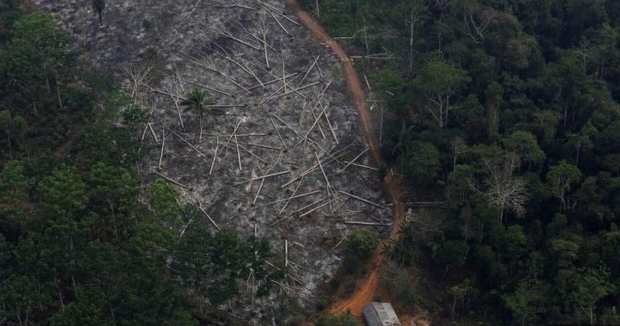 ผืนป่าแอมะซอนในบราซิลถูกทำลายพุ่งสูงสุดใน 12 ปี