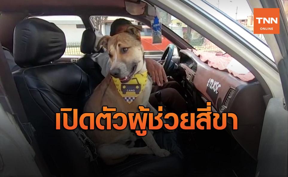 เปิดตัว 'เจ้าคาโน' จากหมาจรยกระดับสู่ผู้ช่วยโซเฟอร์แท็กซี่ในโบลิเวีย