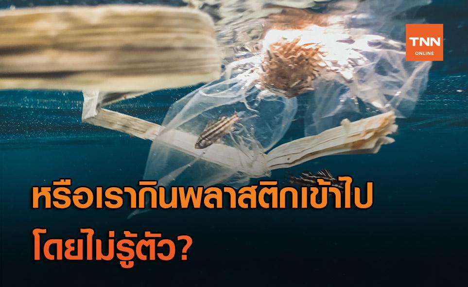 พลาสติกลงทะเลแล้วไปไหน หรือว่าจะอยู่ในท้องของเรา?