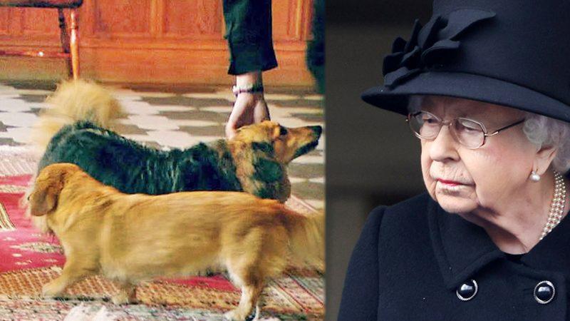 """ควีนอลิซาเบธโทมนัส! สิ้น """"วัลแคน"""" สุนัขทรงเลี้ยง-เศร้าหนักเหลือตูบดอร์กีตัวสุดท้าย"""