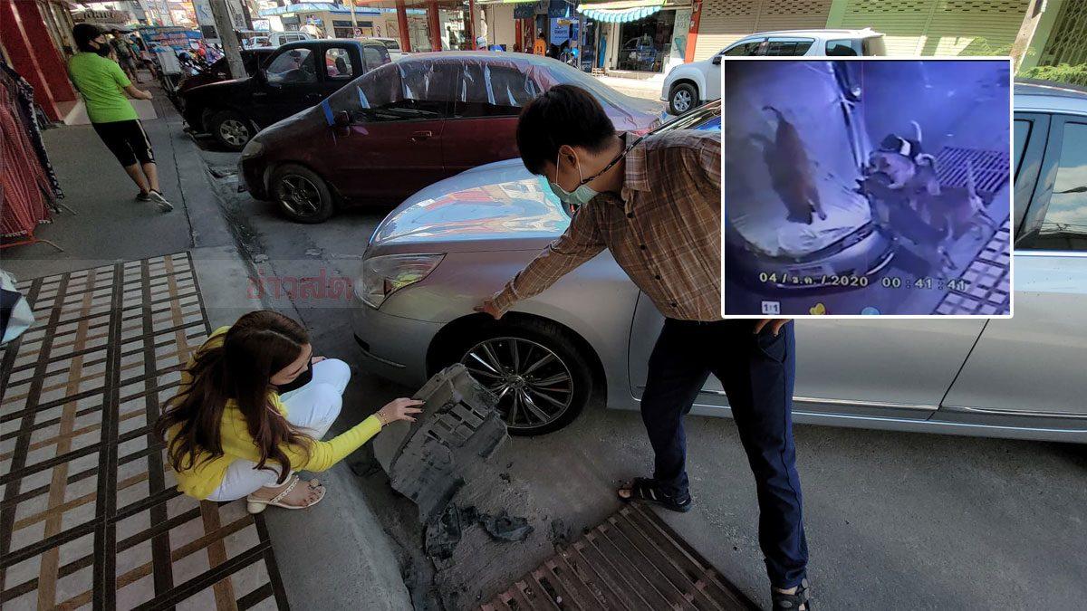 ปัญหาสุนัขจร! รุมกัดรถยนต์ เสียหายหลายคัน วอนจนท.จับไปกักศูนย์เลี้ยง