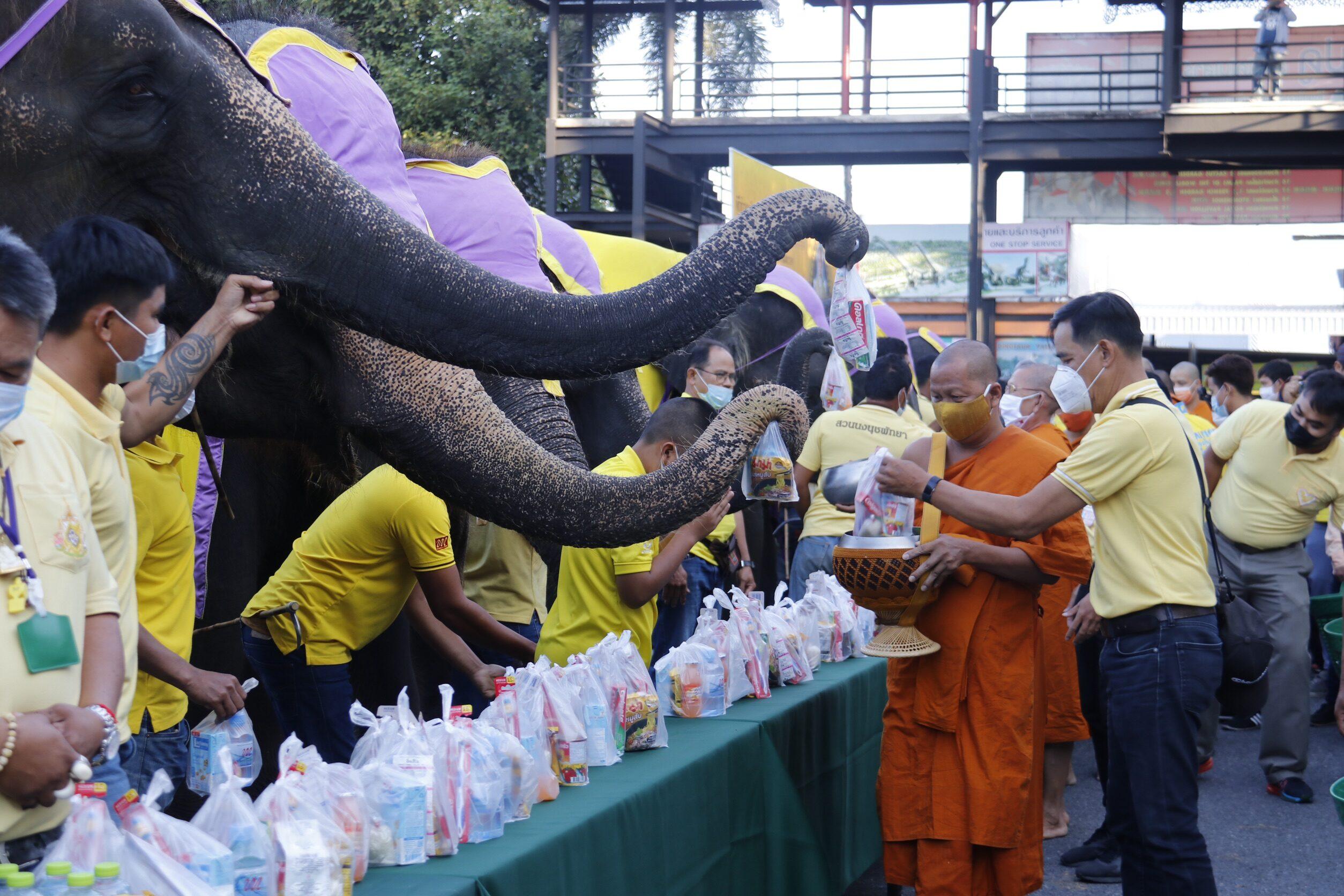 ช้างแสนรู้ 9 เชือก ร่วมทำบุญตักบาตร ถวายเป็นพระราชกุศลในหลวง ร.9