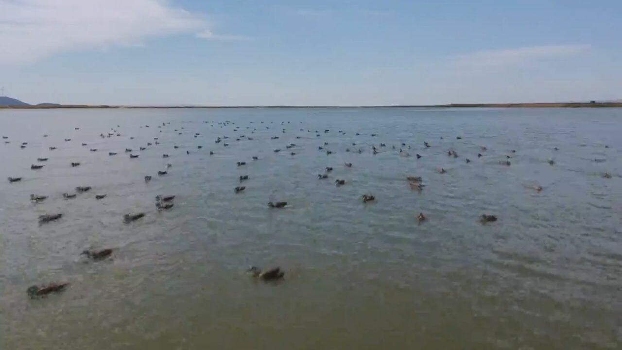 ทะเลสาบน้ำจืดใหญ่สุดในจีน บ้านหลังกว้างของเหล่านกอพยพ