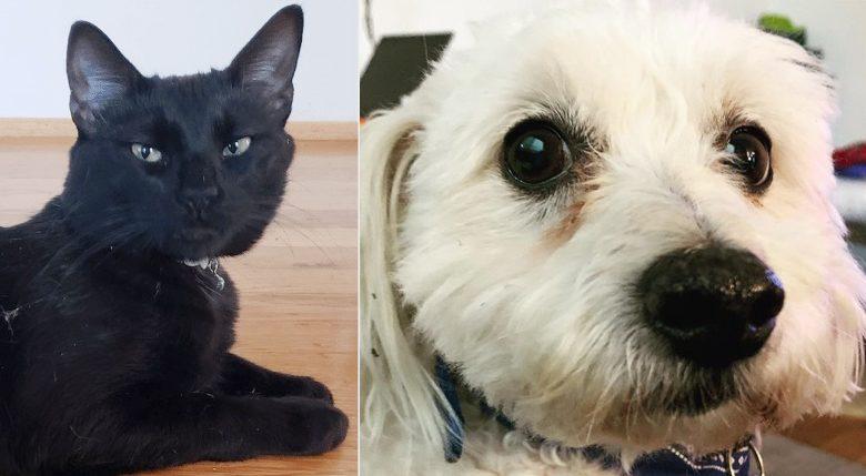 สัตว์เลี้ยงแห่งปี2020 ไทม์เลือกหมาแมวเคยโดนเท ผันเป็นที่รัก