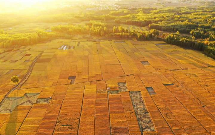 จีนเผย 'ผลผลิตธัญพืช' เฉียด 6.7 แสนล้านกก. ในปี 2020