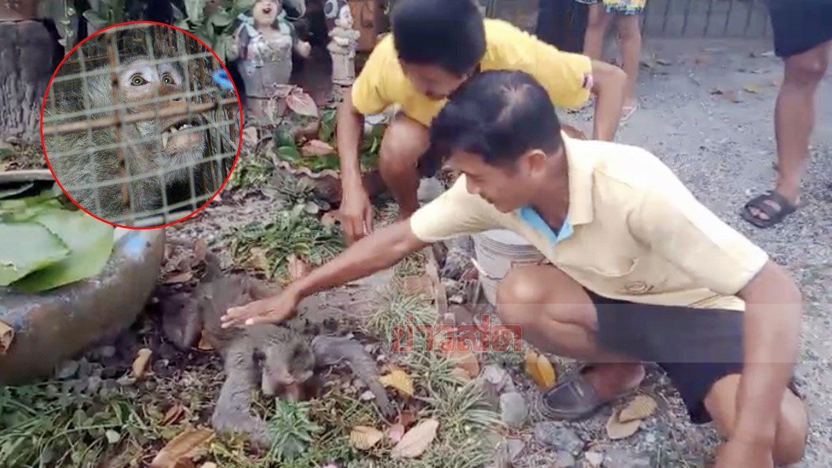 ร่วงกระแทกพื้นนอนนิ่ง! ชาวบ้านเห็นสภาพไม่น่ารอด ลุยปั๊มหัวใจช่วยลิงโดนไฟชอร์ตฟื้นคืนชีพ