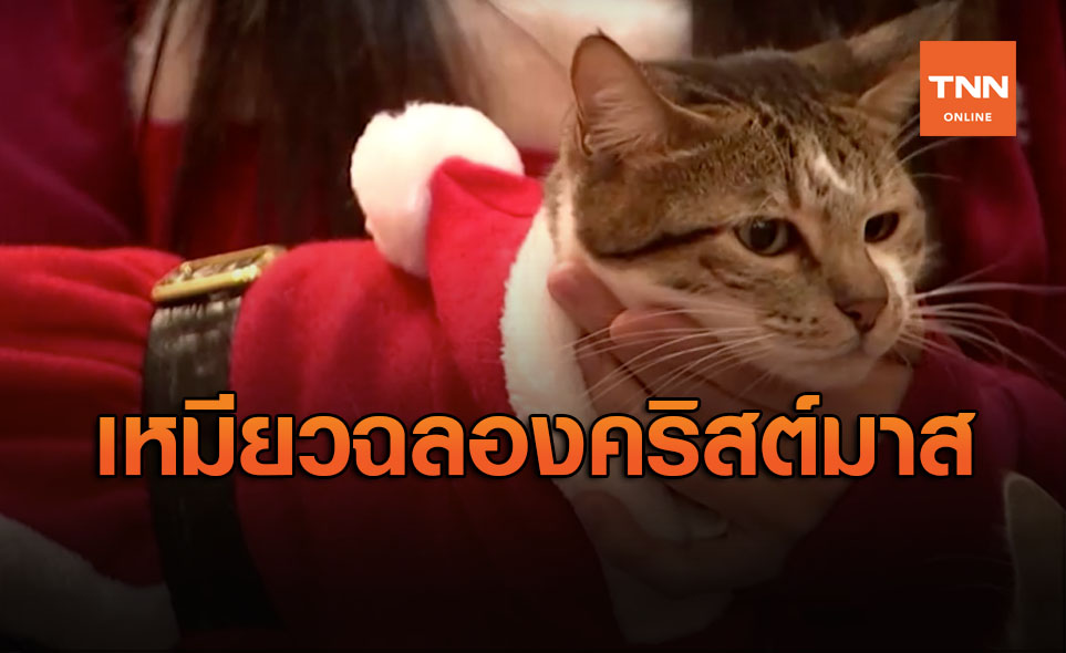 มุ้งมิ้ง! น้อนซานต้าแมวเหมียวฉลองคริสต์มาสในกรุงโซล