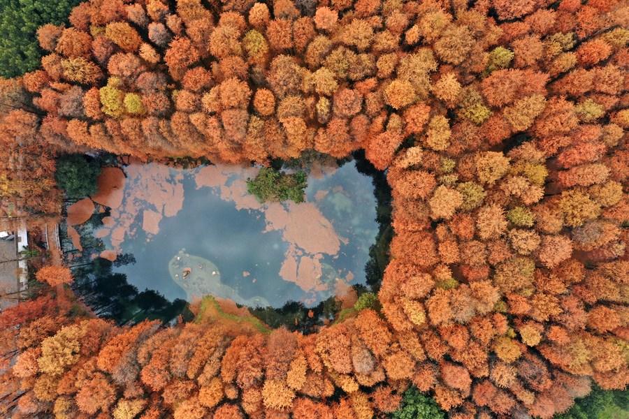 'ทะเลสาบตงหู' และมวลไม้หลากสี อัญมณีแห่งอู่ฮั่น