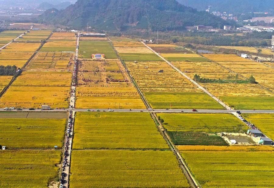 จีนพบ 'นาข้าว' เก่าแก่ 6,000 ปี หนุนศึกษา 'ทำนา' ยุคโบราณ
