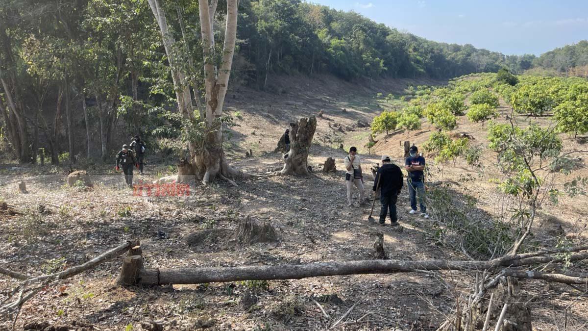 รวบลุงรุกป่าสงวน ตัดเผาทำลายต้นไม้ ขยายที่ดินทำสวนผลไม้ของตัวเอง