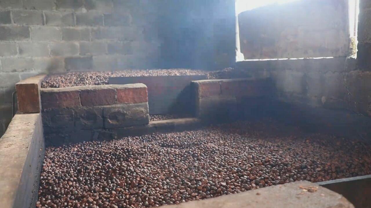 ชม 'โรงงานน้ำมันเมล็ดชา' แรงคนดั้งเดิม หอมฟุ้งทั่วหมู่บ้านในหูหนาน