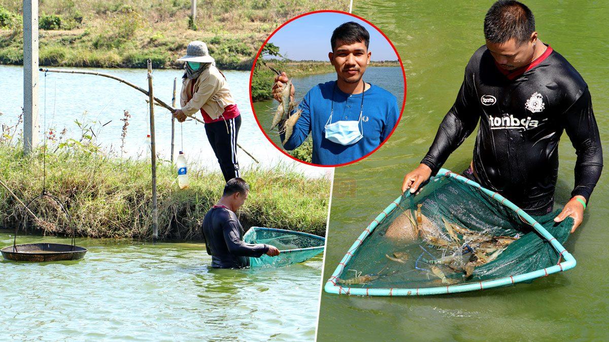 พิษโควิดลามหนัก! ชาวนากุ้งสุดช้ำ กำลังจับขาย ถูกยกเลิกกลางคัน ส่อเจ๊งกว่า 3 ล้าน