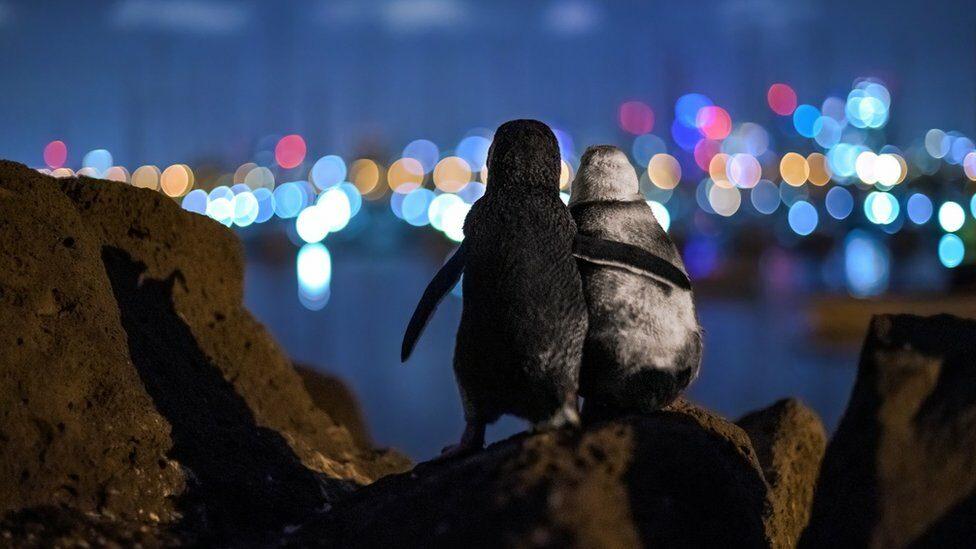 รูปนกเพนกวินม่ายปลอบใจกัน คว้ารางวัลประกวดภาพถ่ายมหาสมุทร ประจำปี 2020