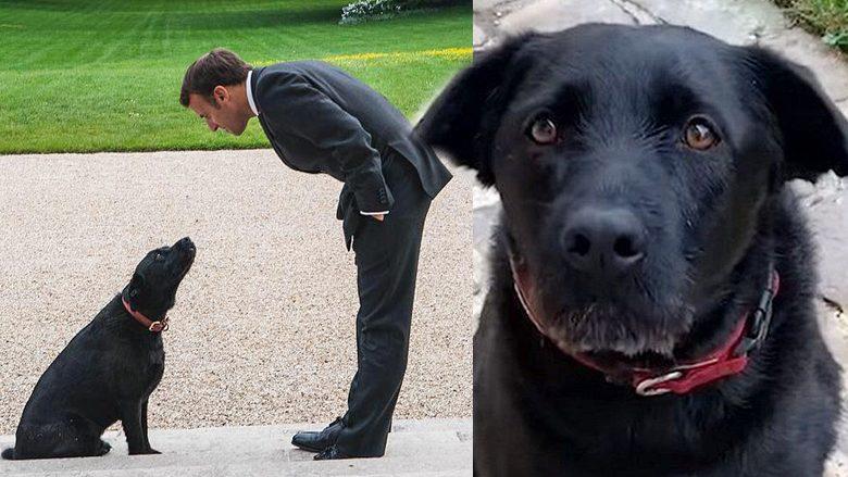 สุนัขหมายเลข1ฝรั่งเศส ส่งสายตา คลิปอ้อนวอนช่วยเพื่อนๆ ถูกทิ้ง