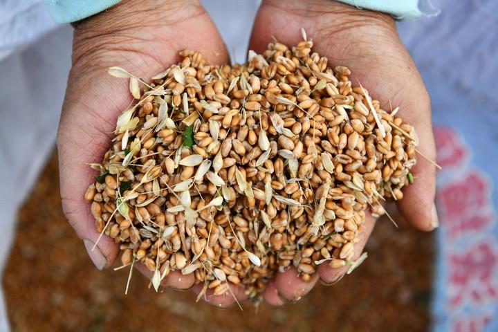 จีนสูญเสียธัญพืช 3.5 หมื่นล้านกิโลทุกปี ก่อนถึงมือผู้บริโภค