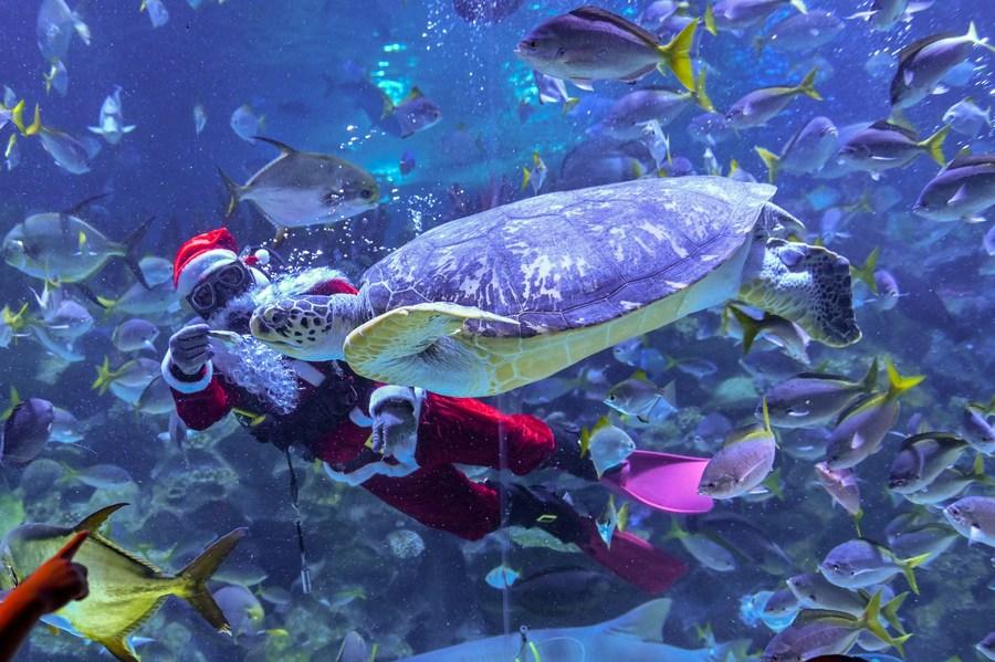 การแสดง 'ซานตาคลอสใต้สมุทร' ในมาเลเซีย