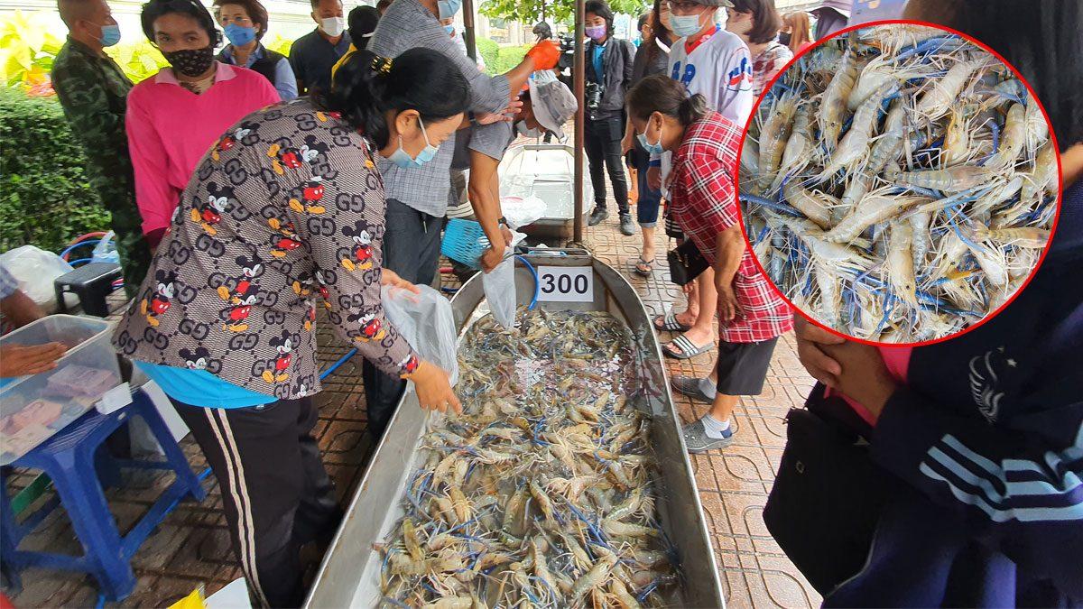 นาทีทอง! แห่ซื้อกุ้งราคาถูก ช่วยชาวราชบุรี หลัง 'โควิด' พ่นพิษ จนขายไม่ได้