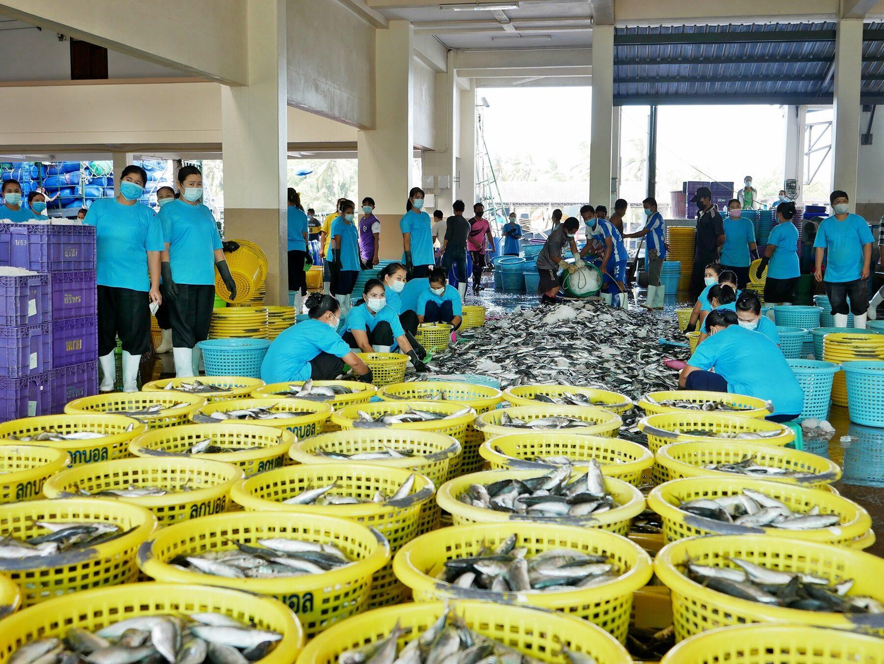 แพปลา'ระนอง'ผุดไอเดีย  ชงรัฐสร้างห้องเย็นไซซ์ใหญ่  พยุงสินค้าทะเลไทยฝ่าวิกฤต