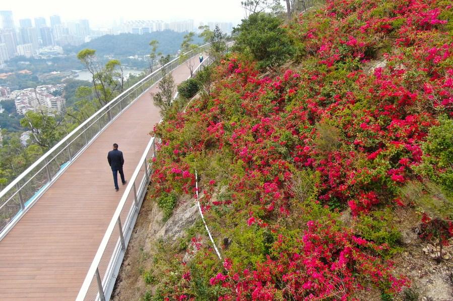 ใกล้เปิดใหม่! ทางเดินลอยฟ้าชมวิวหว่างขุนเขาในจูไห่