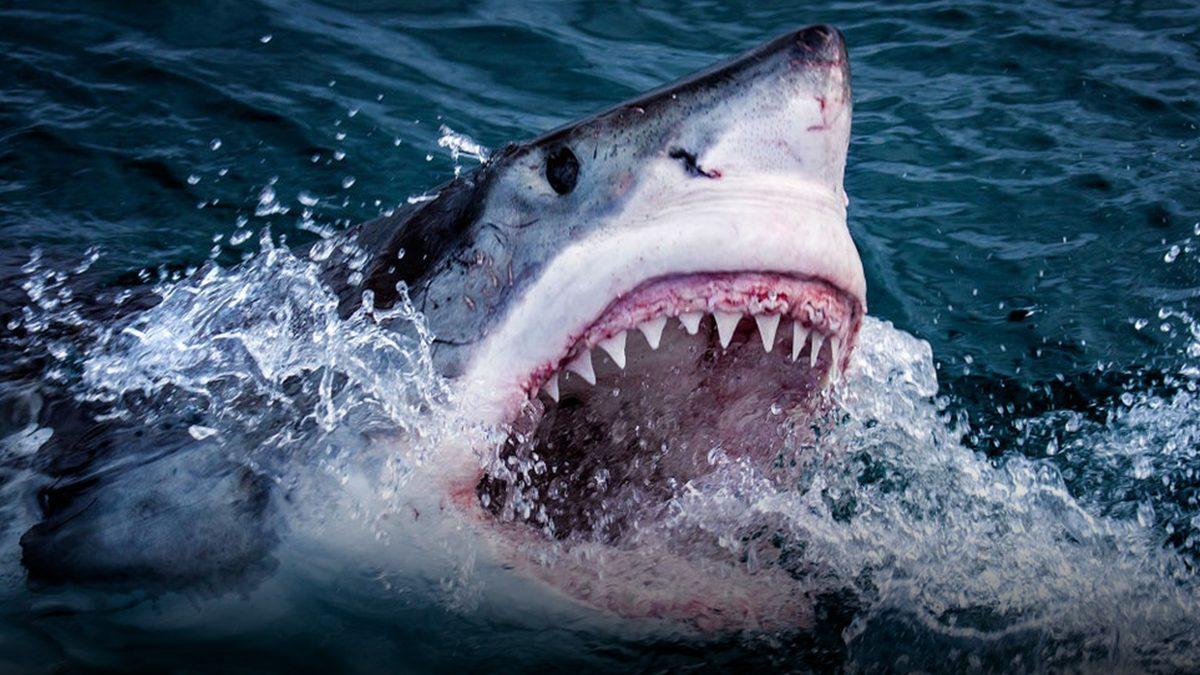 หญิงนิวซีแลนด์ เสียชีวิตปริศนา บริเวณใกล้ชายฝั่ง เจ้าหน้าที่เชื่อว่า ถูกฉลามกัด