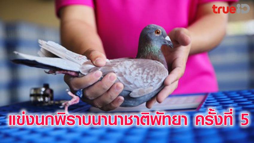 นกพิราบกว่า 7 พันตัว เข้าแข่งนกพิราบนานาชาติพัทยา ครั้งที่ 5