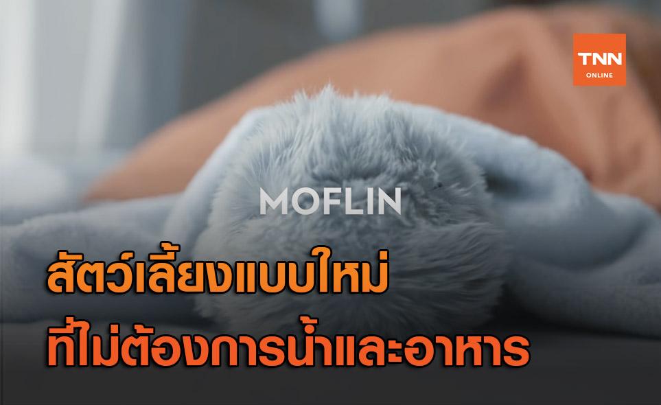 เพื่อนคลายเหงายุคใหม่ กับ 'Moflin' สัตว์เลี้ยงเอไอสุดน่ารัก!
