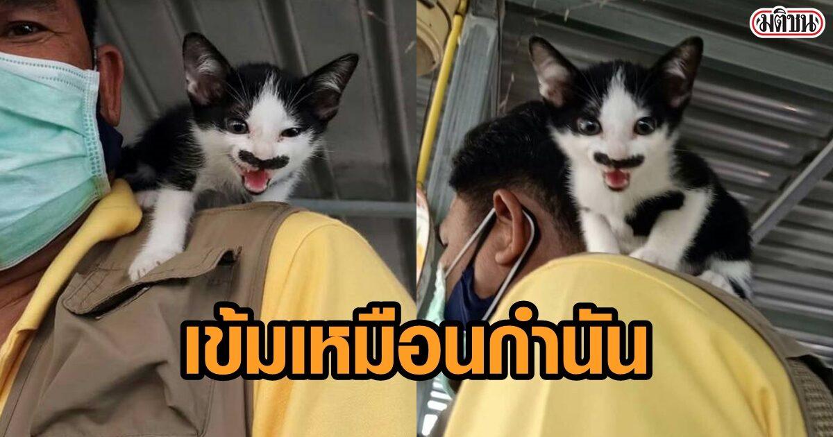 """ฮือฮา! ลูกแมวมีหนวด-เครา เข้มจนเจ้าของเรียก """"ลุงกำนัน"""" ใครเห็นก็บอกแปลก"""