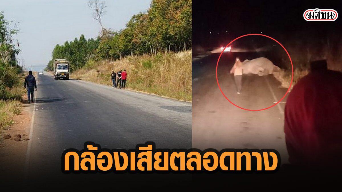 หมดหนทาง ขอความเป็นธรรมให้ช้างป่าถูก18ล้อชน วงจรปิดเสียตลอดทาง