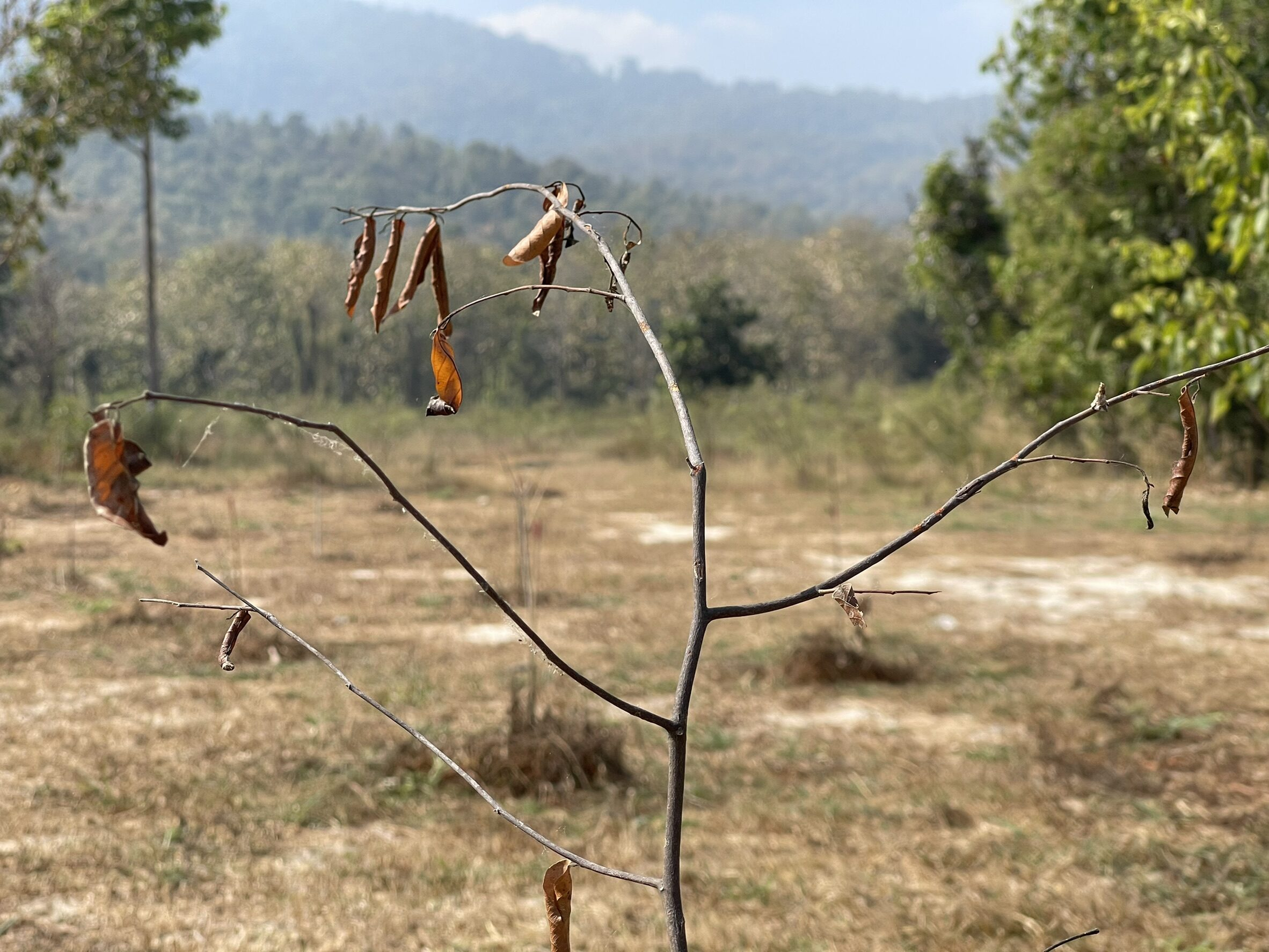 """สำรวจแปลงปลูกป่าห้วยตึงเฒ่า """"ฌอน""""ร่วมปลูก แค่ไม้ผลัดใบหรือยืนต้นตาย"""