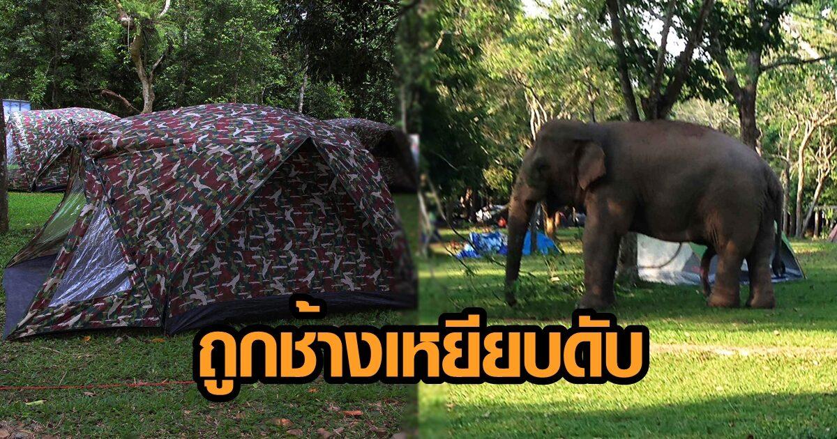 แตกตื่น! ช้างป่า เหยียบนักท่องเที่ยวที่กางเต๊นท์นอนหลับ จนเสียชีวิต