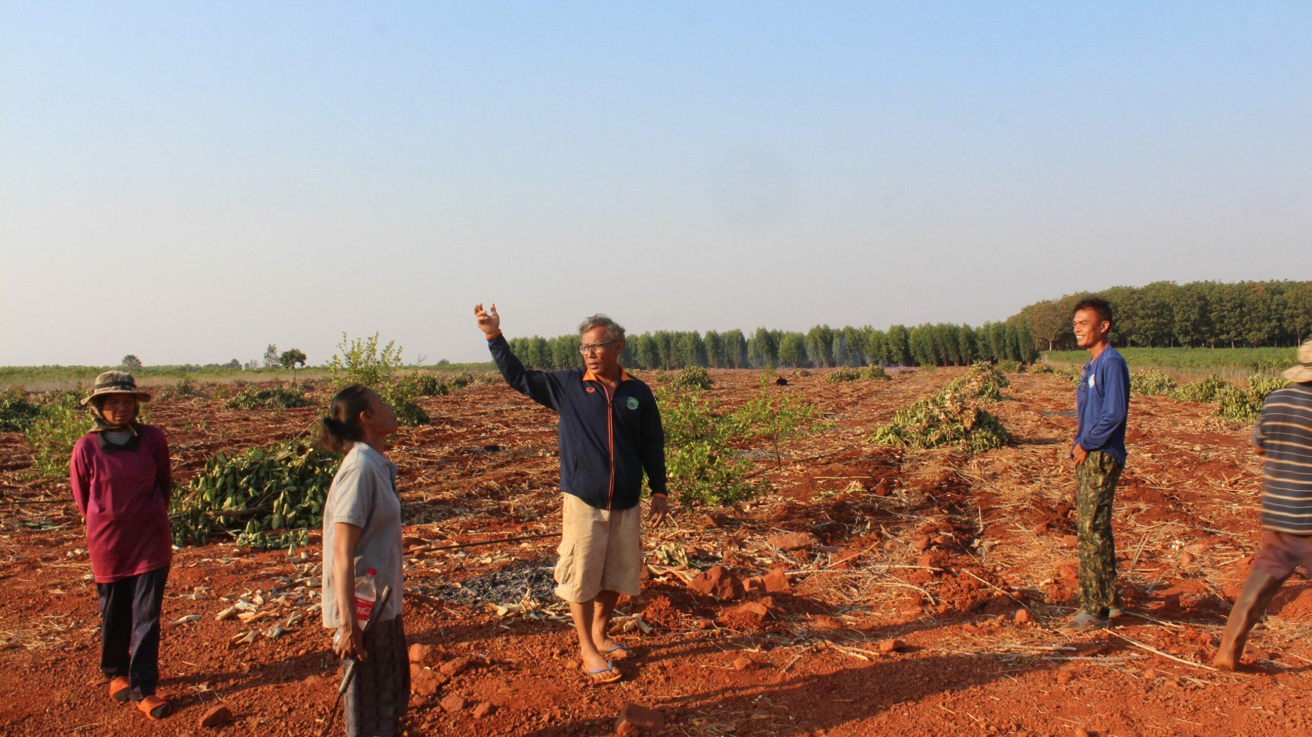 โขลงช้างป่าทับลาน ล้มสวนขนุนชาวบ้านพังยับ กว่า 300 ต้น