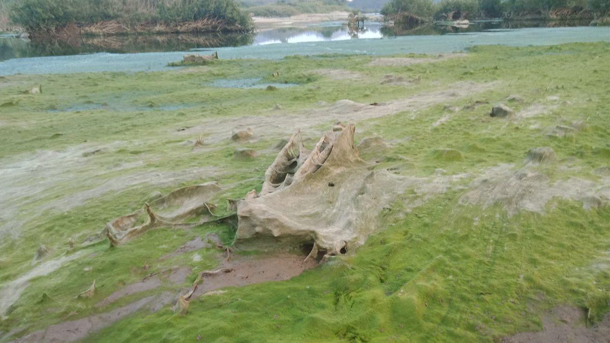 เผยภาพผลกระทบ แม่น้ำโขง จากเขื่อนกั้นสายน้ำ ไก อาหารคนริมน้ำแห้งตาย