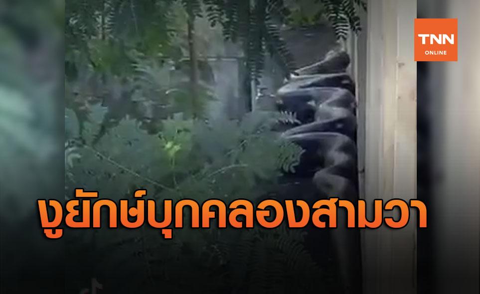 ฮือฮา! งูยักษ์บุกคลองสามวา ชาวเน็ตบอกใหญ่เหมือนอนาคอนด้า