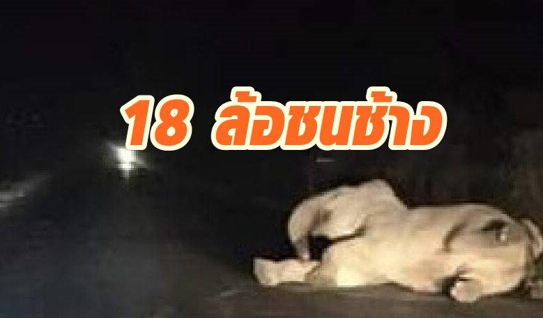 ช้างป่าเขาอ่างฤาไนถูกรถพ่วง 18 ล้อชนอาการสาหัส ขาหักบวม