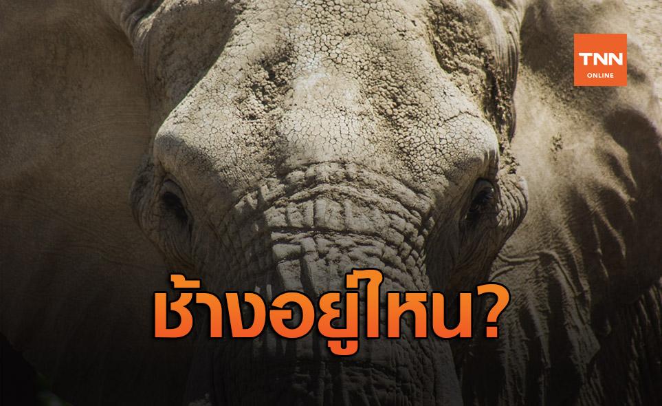 ช้างอยู่ไหน! ตามหาช้างแอฟริกาได้ง่ายขึ้นด้วยการใช้ดาวเทียมติดตาม
