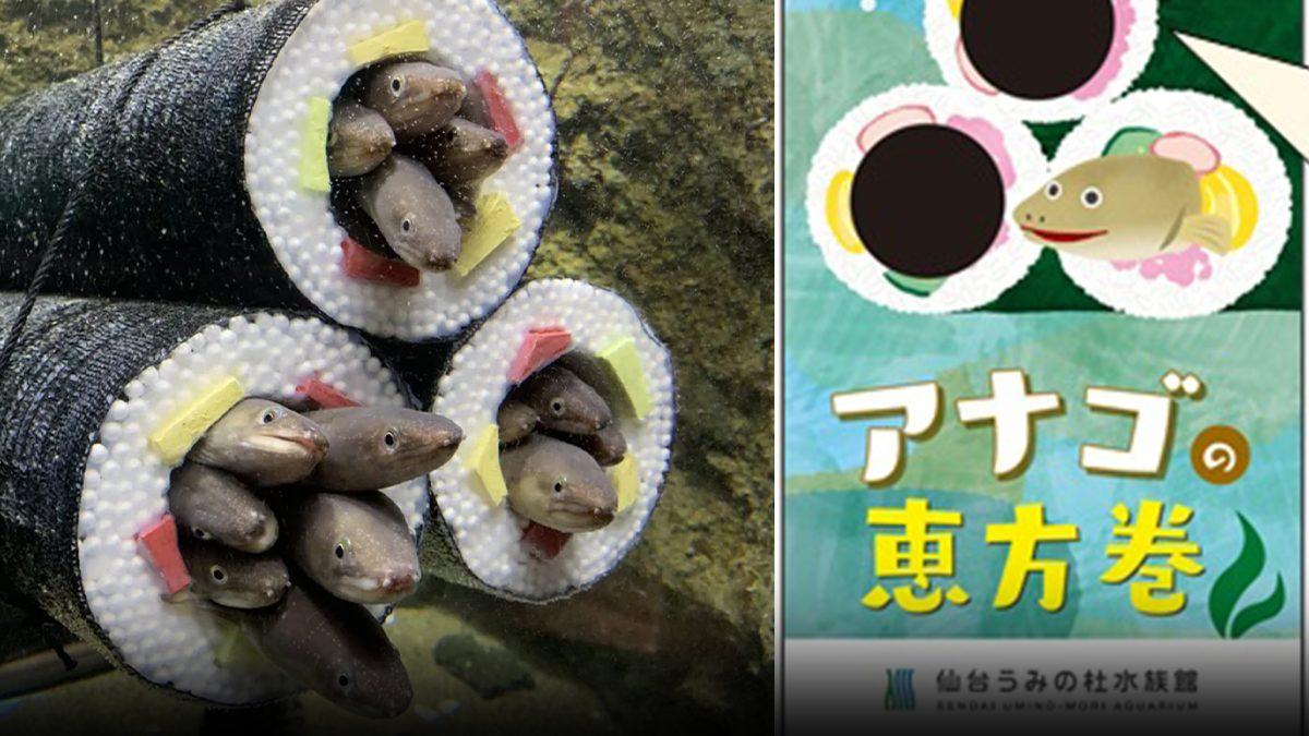 ปลารู้หน้าที่! อควาเรียมญี่ปุ่น ทำซูชิ ให้ ปลาไหลนอน แถมยังมีของฝากสุดน่ารัก
