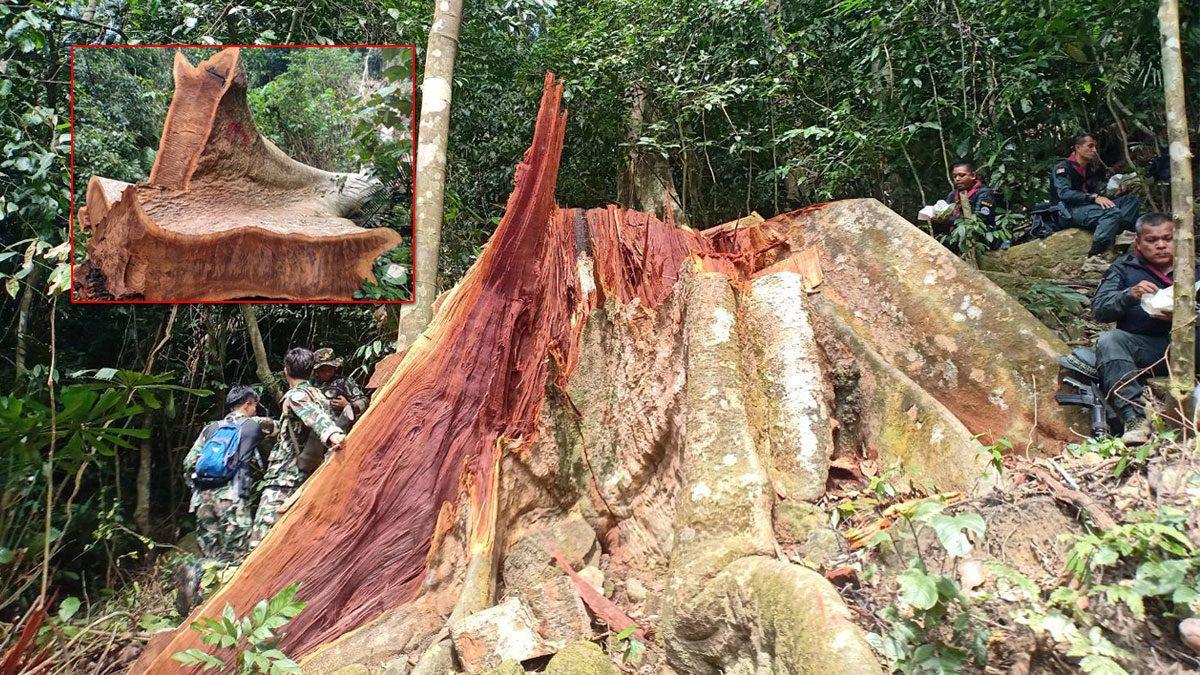 มอดไม้ เหิมหนัก รุกป่าเทือกเขาสันกาลาคีรี ชายแดนไทย มาเลเซีย เสียหายกว่า100ไร่