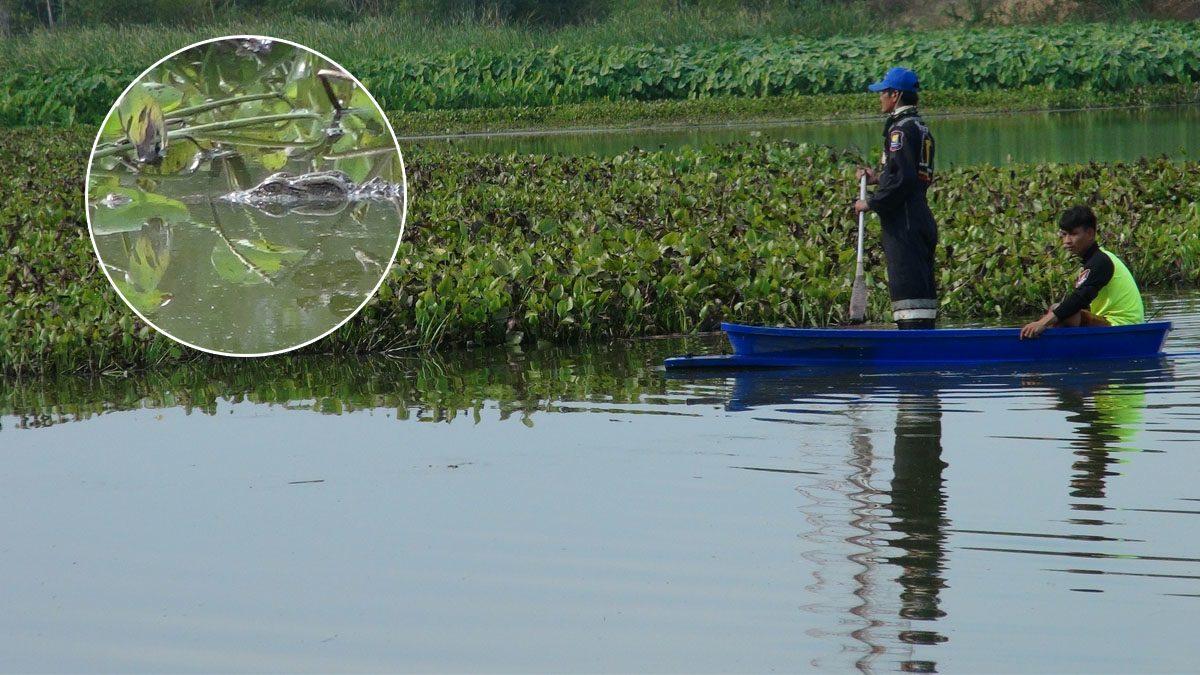 ชาวบ้านผวา จระเข้ยักษ์ ไล่งับชาวบ้าน ในหนองน้ำเมืองปราจีนฯ ลือหึ่งมีเป็น 100 ตัว
