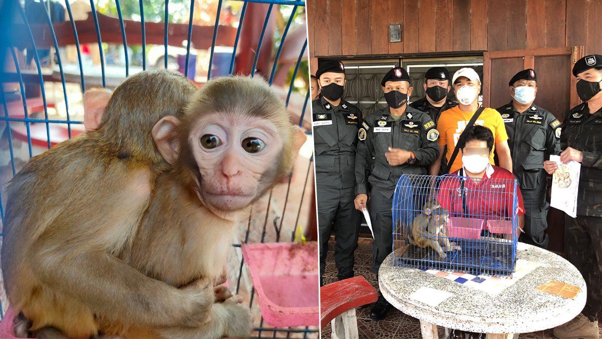 รวบคาบ้าน! หนุ่มวัย 26 ขายลิง ผ่านเฟซบุ๊ก หารายได้เสริม เผยซื้อจากนายพราน