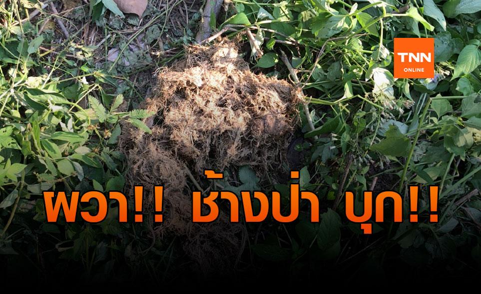ขาดแคลนอาหาร! ช้างป่าบุกชุมชนทำลายบ้าน-พืชการเกษตร