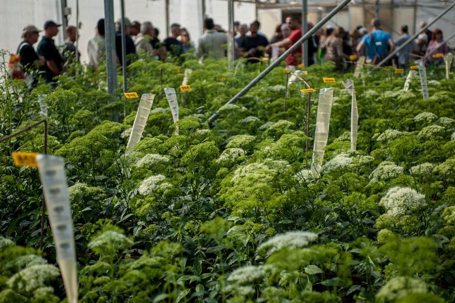 นักวิทย์อิสราเอลพัฒนา 'AI อัจฉริยะ' ทำนายความเครียดของพืช