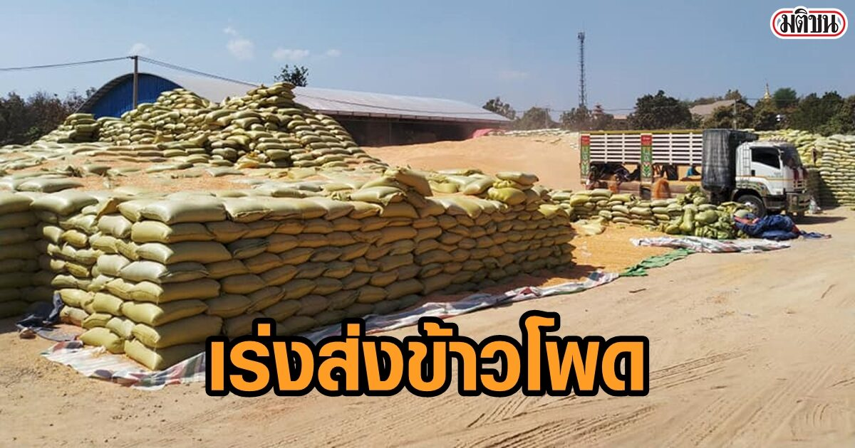 4โกดังใหญ่เมียวดี เร่งส่งข้าวโพดเข้าไทย หวั่นสถานการณ์รปห. ทำต้นทุนขนส่งเพิ่ม