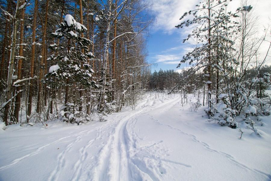 หิมะขาวโพลนห่มคลุมหมู่บ้านกลางป่าในเบลารุส