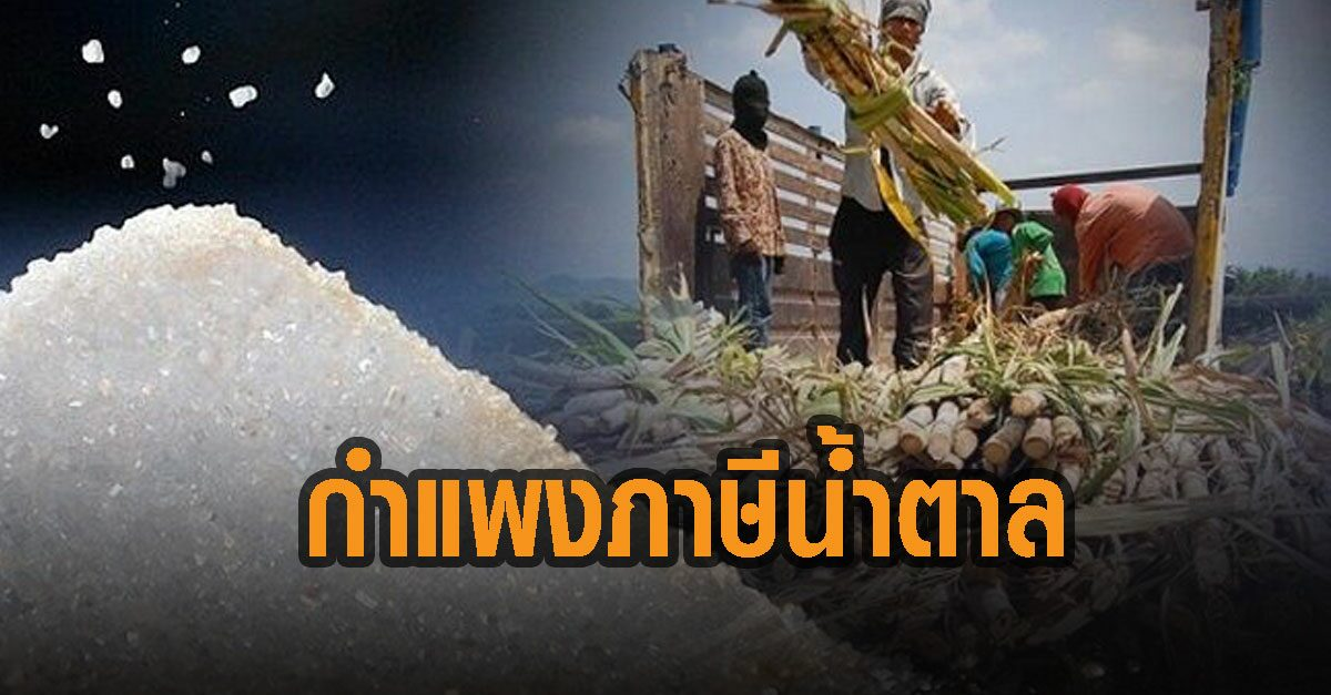 เวียดนาม เล็ง ขึ้นภาษีน้ำตาลนำเข้าจากไทย 34% ชี้ปกป้องอุตสาหกรรมในปท.