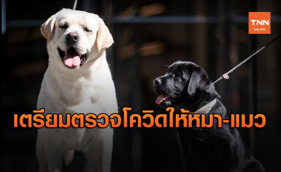 เกาหลีใต้ประกาศตรวจหาเชื้อโควิดให้สัตว์เลี้ยง ทั้งสุนัขและแมว