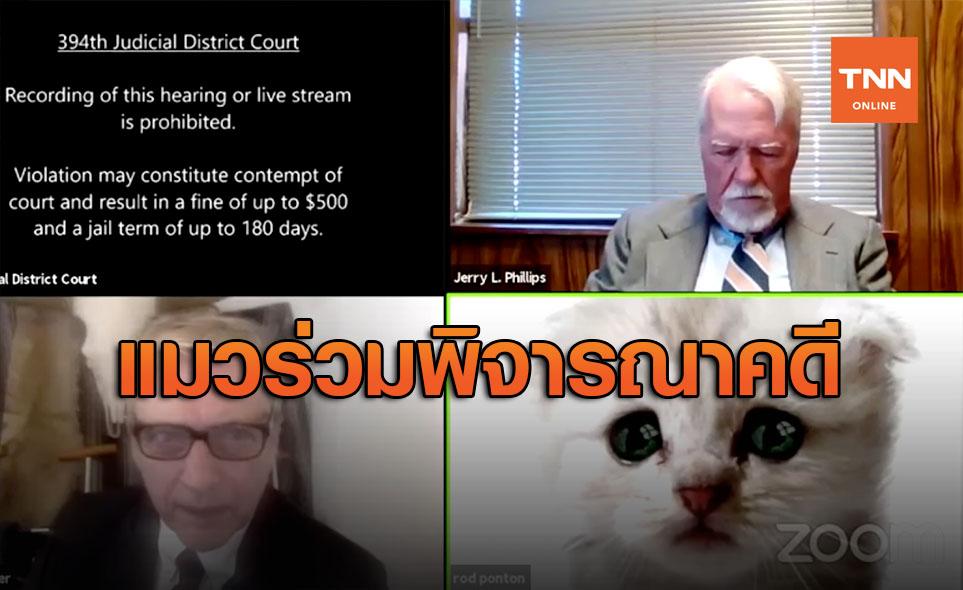 ป่วนปนขำ! ฟิลเตอร์แมวป่วนประชุมพิจารณาคดีออนไลน์ สหรัฐ