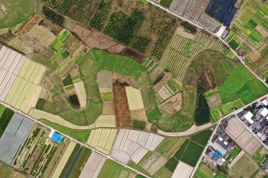 ส่องไร่เกษตรกรรมเขียวขจีในกว่างซี