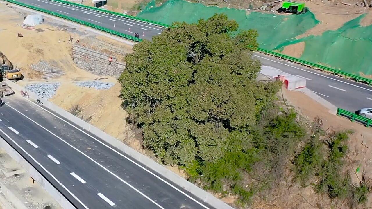 จีนออกแบบ 'ทางด่วน' ใหม่ ปกป้อง 'ต้นไม้' เก่าแก่หลายร้อยปี