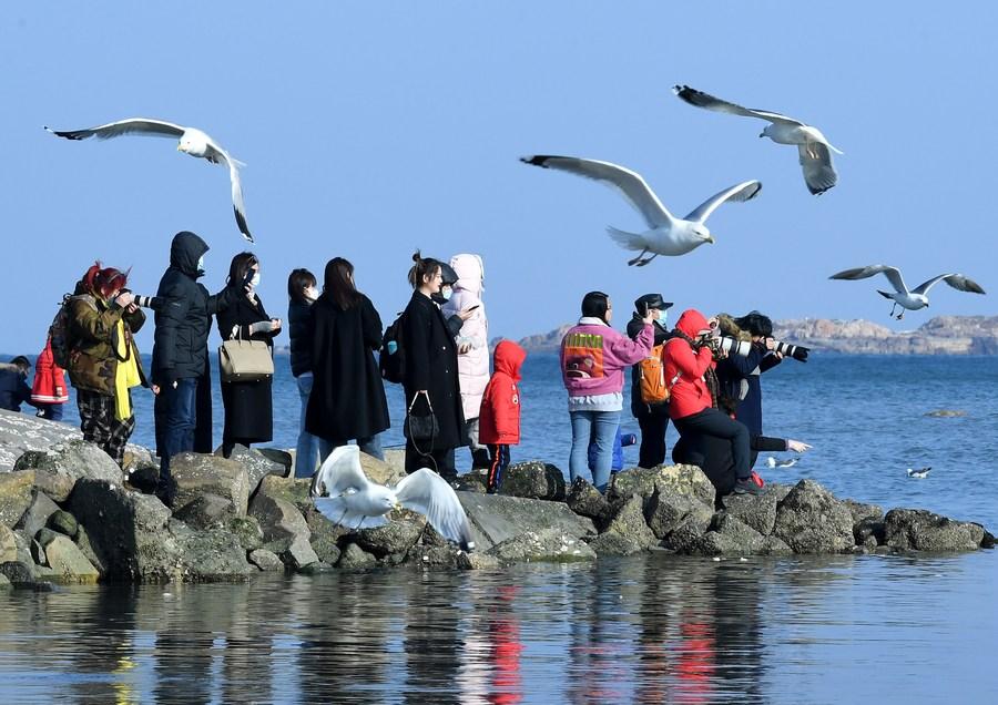 'ชิงเต่า' ที่พักใจคนรักนก-รักทะเล รับตรุษจีน