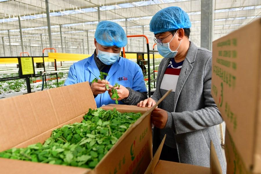 ศุลกากรจีนเผยสกัดกั้น 'ศัตรูพืช' ได้เกือบ 70,000 ครั้งในปี 2020